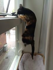 Churchie (el.lemmens) Tags: window cat kat poes raam usetheforce flickrfriday