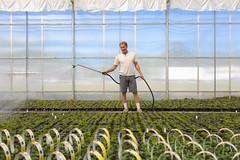 Watering Socks (Rudy Malmquist) Tags: portrait house green michigan indoor greenhouse kalamazoo watering panzee