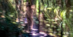 The Way_abstract  (EXPLORE #3) (evanffitzer) Tags: longexposure abstract blur forest dark outdoors colours pastel squiggly evanffitzer evanfitzer fujix100s