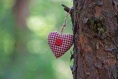 (sabrinasteiger1) Tags: summer sun macro tree nature forest ast heart bokeh sommer natur makro sonne wald karo herz baum rinde gegenlicht knopf herzchen kariert lichtfleck