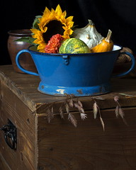 Still Life with Sunflower (suzanne~) Tags: autumn stilllife fall gourds naturallight indoor sunflower trunk tabletop collander