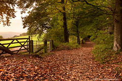 Autumn Morning (Simon Greig Photo) Tags: uk morning autumn england brown plant tree fall nature leaves landscape countryside europe outdoor path seasonal nobody surrey guildford footpath chantries