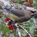 Merry Berry Bird - 3rd Place Fauna - Virginia Staat
