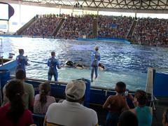 Sea World! (anaiscarrillo23) Tags: remember alamo shamu endless possibilities the 2011vacationsanantonio