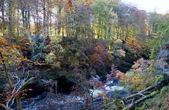 River bank...Glen Esk (monaghan_pam) Tags: autumn trees nature river glenesk
