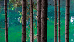 (lotl.axo) Tags: trees lake nature water colors photoshop germany landscape deutschland see thüringen wasser turquoise natur trunks farbe bäume türkis thüringerwald talsperretambachdietharz