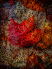 The Nature of Things (gimmeocean) Tags: sliderssunday hss autumn fall fallfoliage iphoneography iphonenography apple iphone