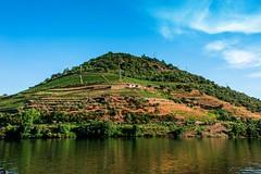 sans titre-6262 (brijjour) Tags: douro porto portugal campagne nature port vignes
