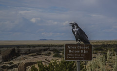 USA Arizona Painted Desert Watching Bird (charles.duroux) Tags: nyip