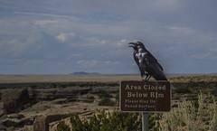 USA Arizona Painted Desert Watching Bird (charles.duroux) Tags: nyip