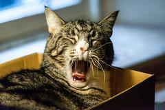 oscar awakens in my study-2 (grahamrobb888) Tags: nikond800 afnikkor80200mm128ed oscar awakening cat pet