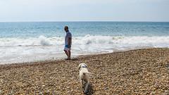 Charlie 16.5 weeks (Mark Rainbird) Tags: bartononsea canon charlie dog mark powershots100 puppy retriever uk england unitedkingdom