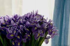 Fleur-de-lis (Natali Antonovich) Tags: fleurdelis flowers belgium