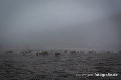 IMG_0063 (norwegen-fotografie.de) Tags: norw norwegen norway norge femunden femundsmarka villmark hedmark see wildnis wald landschaft