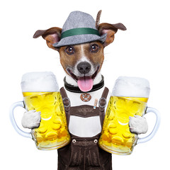 oktoberfest dog (bbbprd2) Tags: alcohol animal bar bavaria bavarian bayerisch beer beerfest beverage celebrate celebration cheers costume culture dirndl dog doggy drink festival funny german germany gingerbread glass hat humor isolated jackrussell joke lederhose mug munich ozapftis october octoberfest oktoberfest party pet pretzel puppy smile terrier toast tradition traditional wiesn