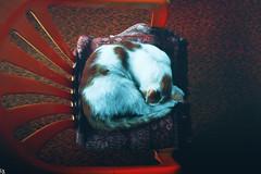 Cats Edition 8 - (8) (Robert Krstevski) Tags: robertkrstevskiblogspotcom robertkrstevski cat cats pet pets animal animals animallovers gato gatos    kotka popular cute catsedition8 edition 8 nikond3300 nikons2500 nikon macedonia blogspot kitty kitten kittens kitties cuteness