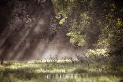 Somerset Sunrays (Emily_Endean_Photography) Tags: somerset sun sunrays sunrise mist fog morning early trees nature nikon telephoto autumn