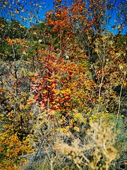 Fall on the West Side (torhalla) Tags: fall autumn color photography mountians trees hiking torhalla58 leaves moss outdoors colors mountains