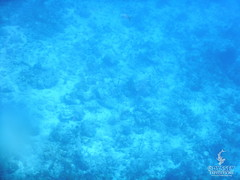 BVI-16-V3-ZoeK-0551 (www.odysseyexpeditions.com) Tags: odysseyexpeditions odyex britishvirginislands bvi scuba sailing marinebiology teen summercamp teenadventure sailingcamp scubacamp marinebiologycamp marinesciencecamp biologycamp adventurecamp