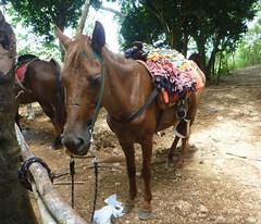 Hiking to Salto El Limon (little_duckie) Tags: lasterrenas republicadominicana dominicanrepublic saltoellimon ellimon cascada waterfall beach laplaya playa laplayalasballenas