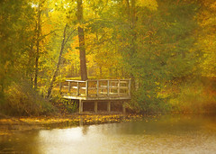 autumn at the dock (Hal Halli) Tags: relaxation relaxing serene serenity reflection red peaceful pier provincial quebec shore stillness wilderness wooden woods yellow water vacation tranquil tranquility trees park outdoor cottage dock dusk fall colorful chair calm calmness canada foliage forest natural nature october orange national leaves getaway lake landscape autumn wallart