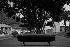 Banco de jardim (miltonvieira12) Tags: banco jardim fotografia preto branco