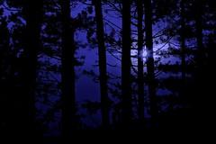 Night forest (M.K.S. v i d e o • p h o t o g r a p h y) Tags: panorama pratomagno toscana tuscany toscane tuscani marksoetebierphotography mksvideophotography marksoetebier markchristiansoetebierphotography night nightshot arezzo arno valdarno canon canoneos70d gruppofotograficolaterinese foresta forest borro bosco bos