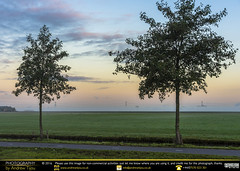 Trees, Fields and Mist (andrewtijou) Tags: andrewtijou nikond7200 europe netherlands southholland dutch delft sunrise mist morningmist