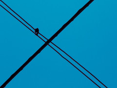 Cables cruzados (Letua) Tags: cruce cruzado cruz cables wires cross crossed azul celeste minimalista minimalism 7dwf crazytuesdaytheme
