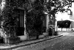 IMG_41092nb (aurel_grand) Tags: paris 13e cité floral florale bucolique fleurs pavillon pavillonnaire ruelles rues rue noir blanc noirblanc pots architecture automne flower fall
