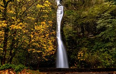 Horsetail Falls (Cole Chase Photography) Tags: waterfall horsetailfalls oregon columbiarivergorge pacific northwest canon eos5dmarkiii
