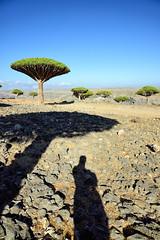 Momi Shadows (indomitablemachine) Tags: dixam dragonblood island momi plateau shadow socotra tree yemen hadhramautgovernorate ye