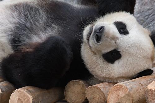 Thumbnail from Toronto Zoo