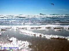 Levante beach Benidorm 2009. ((c) MAMF photography..) Tags: beauty beautiful beach benidorm levantebeach coast sky enblancoynegro spain flickrcom flickr flight google googleimages greatphotographers greatphoto image mamfphotography mamf photography photo sea water wet
