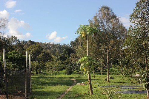 Natural Tropical Farm