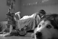 (2016-09-22 22-27-22) (Oleg Green (lost)) Tags: family children cozy home husky dog bw