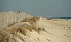 DSC_0983-2 (Michael P Bartlett) Tags: maryland assateagueisland beaches