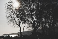 IMGP0586 (maurizio siani) Tags: napoli naples italia italy pentax k70 novembre autunno 2016 18135 18135mm albero alberi sole sun lungomare caracciolo golfo raggi mattina giornata