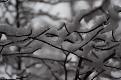 Snowy branches (marensr) Tags: tree branches snow snowy winter nature water chicago bokeh macro branchlet outdoor