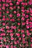 _DSC0779 (Riccardo Q.) Tags: parcosegurtàtulipani places parco altreparolechiave fiori tulipani segurtà