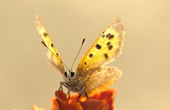 Butterfly / Мотылек
