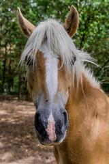 Chevaux (Pierre ESTEFFE Photo d'Art) Tags: france cheval poney dressage pré équestre équidé élevage nibelle padoc loiret45