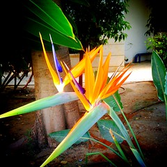 Flower (kolderal) Tags: uploaded:by=flickrmobile colorvibefilter flickriosapp:filter=colorvibe