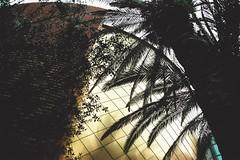 arabian dream (omnia_mutantur) Tags: italy plant milan building planta italia expo milano edificio pavilion palazzo costruzione palma btiment italie pavillion paume predio pavilho pianta pabelln vegetazione padiglione miratsarabesunis unitedarabianemirates  expo2015 emiratosrabesunidos emiradosrabesunidos expomilano expomilan