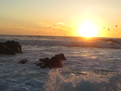 Birds at Asilomar at Sunset (Paul 49 55) Tags: ocean california sunset bird monterey surf pacific tide shoreline wave shore montereycounty pacificgrove asilomar tidal asilomarstatebeach
