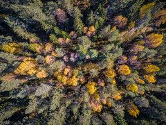 Autumn forest (kaifr) Tags: birch birds eye view trees forest fall colors green aerial pines yellow birdseyeview oslo norway no fromabove colours autumn