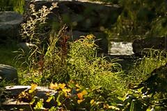 Bachlauf (rieblinga) Tags: pflanzen steine bach gegenlicht