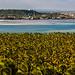 Panorama: Praia do Gunga + Loagoa de Roteiro