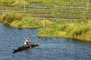 Man collecting seaweed on Inle Lake for the floating gardens - Inle Lake - Myanmar