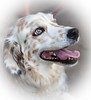 Beautyfull Lady (konoli18) Tags: dog pet brown nice hund goingforawalk braun elegant browneyes haustier spaziergang beautyfull brauneaugen brav wunderschön begleiter